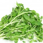 Organic Pea Sprouts