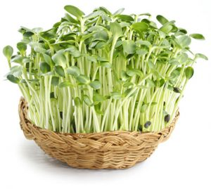 Why we love to add sprouts to our raw food and raw juices? What are sprouts  exactly? Well, there are a lot of different types, almost as many as there  are ...